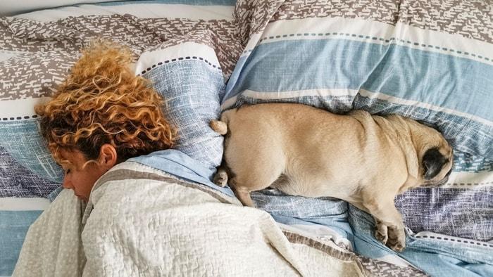 pugs sleeping habits