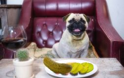 Can Dogs Have Dill Pickles