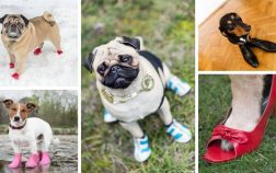 Dog Shoe Size By Breed Is Not An Exact Science