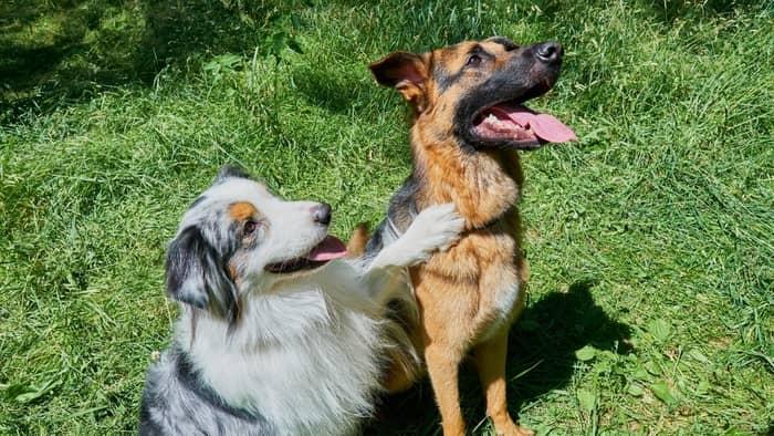 German dogs