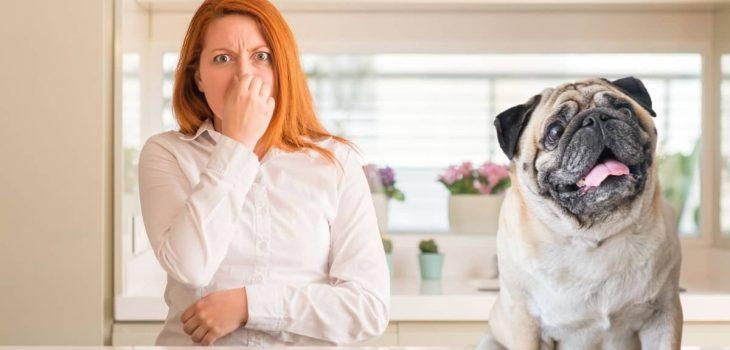 Why Do Pugs Stink