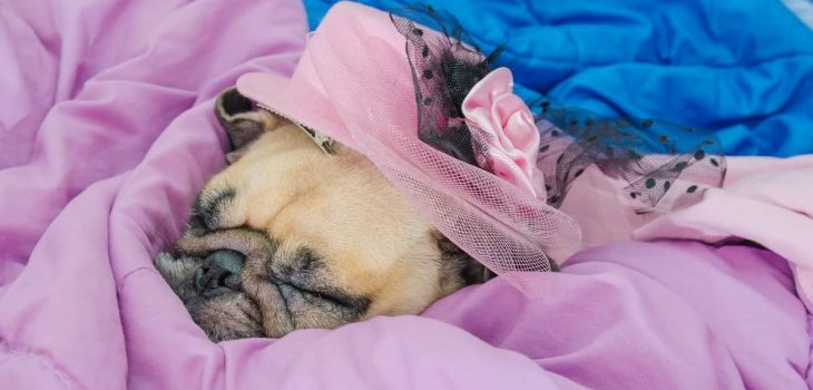 Can Dogs Breathe Under Blankets