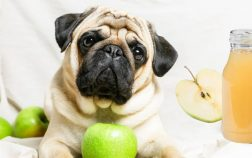 Is Apple Juice Bad For Dogs