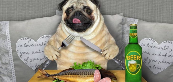 Is Fish Food Bad For Dogs