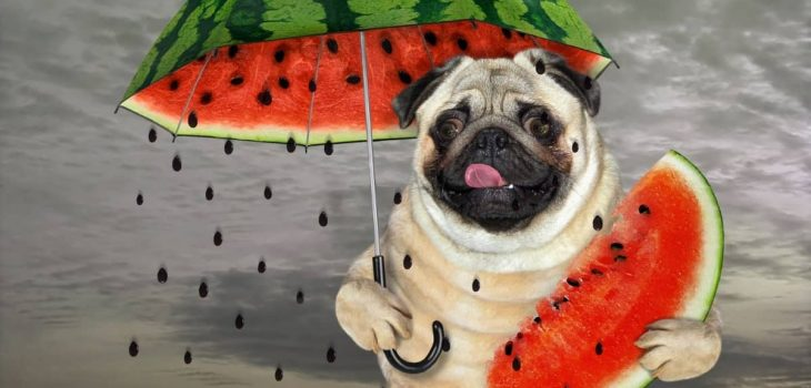 Is Watermelon Poisonous To Dogs